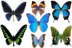 Verscheidene vlinders Royalty-vrije Stock Afbeelding