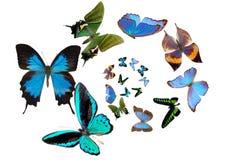 Verscheidene vlinders Royalty-vrije Stock Afbeeldingen