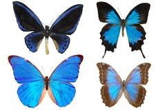 Verscheidene vlinders Stock Foto