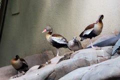 Verscheidene vogels zitten door het water in een verre, verre voorstad Royalty-vrije Stock Fotografie