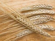 Verscheidene wheatear aan boord Stock Foto