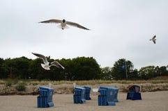 Verscheidene zeemeeuwen die over de ligstoelen vliegen Stock Fotografie
