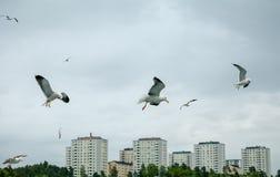 Verscheidene zeemeeuwen tijdens de vlucht bewolkte dag Royalty-vrije Stock Afbeeldingen