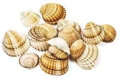 Verscheidene zeeschelpen liggen op een witte achtergrond Stock Foto's