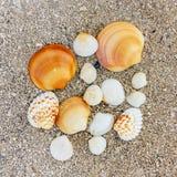 Verscheidene zeeschelpen van verschillende vormen in het zand op de overzeese kust stock foto