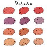Verscheidenheden van Aardappels van Verschillende Kleuren Roze, Viooltje, Bruin Purple, Geel, Voedselillustratie Verse Landbouwbe vector illustratie