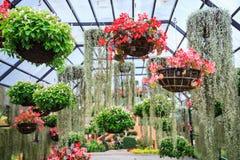 Verscheidenheden van bloeiende kleurrijke installaties en bloemen in het hangen van bloempot in tropische sier binnentuin in natu stock afbeelding