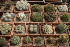 Verscheidenheid van goederen Groene cactussen en succulents het groeien in potten royalty-vrije stock afbeeldingen