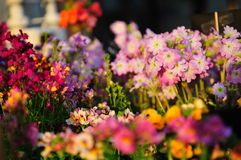 Verscheidenheid van kleurrijke bloemen die in de lente bloeien royalty-vrije stock foto's