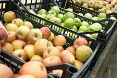 Verscheidenheid van organische appelen in kratten stock foto