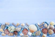 Verscheidenheid van overzeese shells stock afbeelding