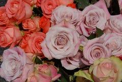 Verscheidenheid van Rose Blossoms Royalty-vrije Stock Afbeeldingen