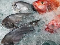 Verscheidenheid van ruwe verse vissen die op koud ijs in zeevruchtenmarktkraam koelen Stock Afbeeldingen