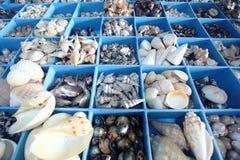 Verscheidenheid van Shells Royalty-vrije Stock Foto