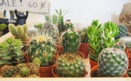 Verscheidenheid van Succulente installaties royalty-vrije stock afbeelding