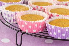 Verscheidenheid van vers gesteund die huis cupcake in roze en viooltje wordt gemaakt Royalty-vrije Stock Foto's