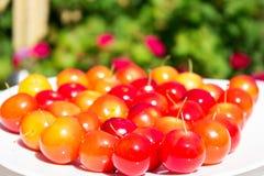 Verscheidenheid van verschillende rode vruchten: kers-pruimen Stock Afbeeldingen