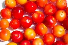 Verscheidenheid van verschillende rode vruchten: kers-pruimen Royalty-vrije Stock Afbeelding