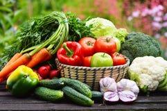 Verscheidenheid van verse organische groenten in de tuin Stock Afbeeldingen