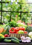 Verscheidenheid van verse organische groenten in de tuin Stock Foto
