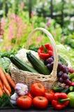 Verscheidenheid van verse organische groenten in de tuin Stock Fotografie