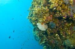 Verscheidenheid van vissen en koraal Royalty-vrije Stock Foto