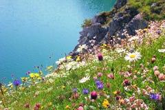 Verscheidenheid van wildflowers, kustlandschap Royalty-vrije Stock Fotografie