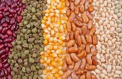 Verscheidenheid van zaden royalty-vrije stock afbeeldingen
