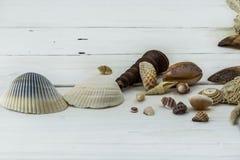 Verscheidenheid van zeeschelpen, koralen, shell, zeester, op witte achtergrond stock fotografie