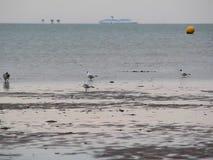 Verschepende steeg en zeemeeuwen op eb stock video