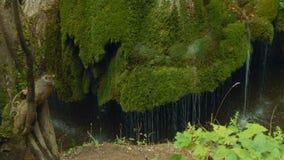 Verschieben-Froschperspektive des einzigartigen Bigar-Wasserfalls in Rumänien stock video footage