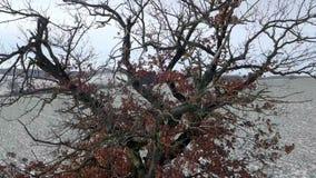 Verschieben von Luftgesamtlänge des Winterbaums stock footage