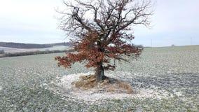 Verschieben von Luftgesamtlänge des Winterbaums stock video