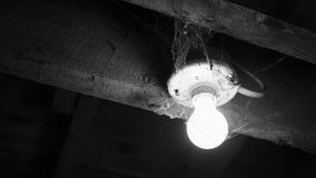 Verschieben zu einer Glühlampe bedeckt in den Spinnennetzen - Horrorkonzept - Schwarzweiss-Version stock video