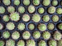 Verschieden vom kleinen Kaktus im Topf Lizenzfreie Stockfotografie