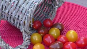 Verschieden von den bunten Kirschtomaten stock video footage