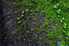 Verschieden von den Farnblättern auf Steinhintergrund stockfoto