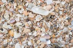 Verschieden von den Seeoberteilen auf Sand Stockfoto