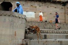 Verschiedenartigkeit in Indien lizenzfreies stockbild