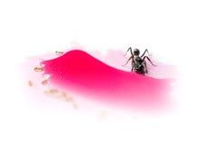 Verschiedene Ameisen, die roten Süßwassertropfen teilen Stockfotografie