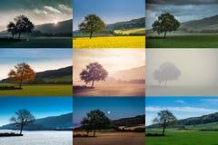Verschiedene Ansichten eines Baums Stockbild