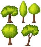 Verschiedene Arten des grünen Baums Lizenzfreie Stockfotografie