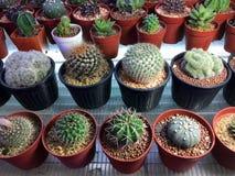 Verschiedene Arten des Kaktus Lizenzfreie Stockfotos
