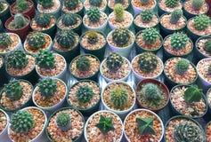 Verschiedene Arten des Kaktus Stockfotos