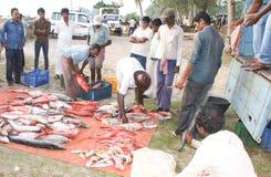 Verschiedene Arten des salzigen Wassers fischen entladen werden Lizenzfreies Stockbild