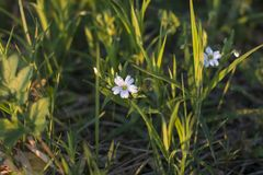 Verschiedene Arten von Blumen, von Feld, von Wald und von Park lizenzfreie stockfotografie