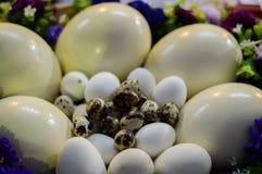 Verschiedene Arten von Eiern Stockfoto