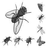 Verschiedene Arten von einfarbigen Ikonen der Insekten in der Satzsammlung für Design Isometrischer Symbolvorrat des Insektenglie Lizenzfreie Stockfotos