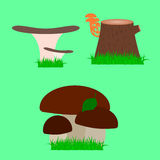 Verschiedene Arten von essbaren Pilzen Stockfoto