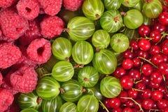 Verschiedene Arten von frischen Beeren schließen oben als Hintergrund Lizenzfreie Stockfotos